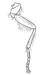 Movement of Joints. Insects: Structure and function, by D G Mackean How To Draw Insects, Insect Legs, Anatomy Drawing, Leg Anatomy, Insect Anatomy, Orchid Mantis, Pirate Activities, Spider Legs, Spider Costume