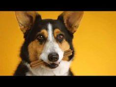 Koirien tekohampaat, yksi suosikeista! // Pedigree Doggie Dentures - YouTube