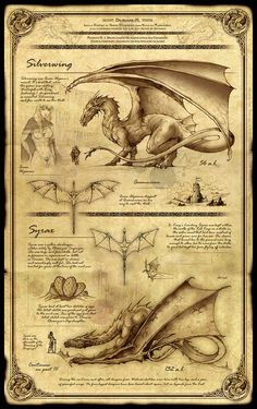 Dragonkin Part II - Silverwing and Syrax by Feliche Dragon Fantasy Myth Mythical Mystical Legend Dragons Wings Sword Sorcery Magic Mythical Creatures Art, Mythological Creatures, Magical Creatures, Hogwarts, Harry Potter Poster, Dragon Artwork, Book Of Shadows, Fantastic Beasts, Dungeons And Dragons