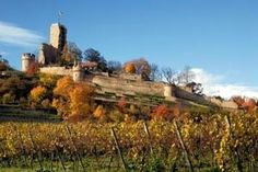 The German Wine Route: a symphony of grapes in the sun-kissed Palatinate region