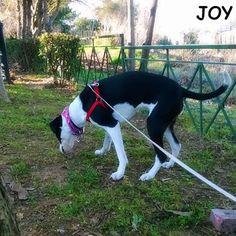 Just me, sniffing the grass on the park!! 🐾🐾🐶 Follow JOY at her Facebook page for many more photos and videos:  https://www.facebook.com/JOYMixedBreedGirl/  #dog #instagramdogs #ilovemydog #instapuppy #dogfamily #doggie #ilovemypet #dogofinstagram #happydog #dogface #dogsofig #dogselfie #doglovers #dogsofinstaworld #petstagram #doglover  #petlover #instadog #dailypawwoof #happydog_feature #dogsubmit
