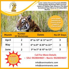 Photography Workshops, College Students, Wildlife Photography, Tigers, School, Student, Nature Photography