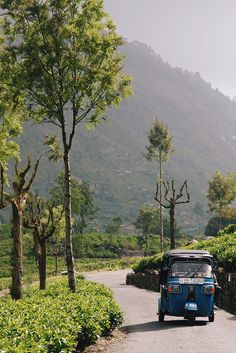 Sri Lanka - Tuktuk driving through tea plantations nearby Haputale