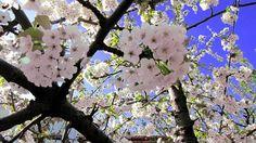 Spring in Kala Nera Pelion Greece