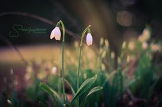 early spring by MaaykeKlaver