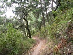 Purisima Creek, Soda Gulch, and Harkins Ridge Loop, Purisima Creek Redwoods Open Space Preserve, Midpeninsula Regional Open Space District, San Mateo County
