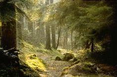 Google Image Result for http://www.forestry.gov.uk/website/fcpiclib.nsf/LUImagesByFilename/1010606big.jpg/%24FILE/1010606big.jpg