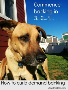 Welcome to Bark Week Day 2! If you missed yesterday's post, head on over and read all about how to get your dog to stop barking on cue. For today, though, this one was requested many times, and it'...