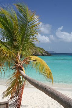 Contact #BlueOceanBooking to visit these stunning Virgin Islands locations on your next vacation!  Trunk Bay, St John, USVI