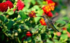 """Close Encounters of the Bird Kind"" (2017) . . . . . #birds #hummingbird #bird #nature #wildlife #pretty #animals #birdsofinstagram #outdoors #montereybay #california #minivacay #colorful #photography #nikonphotography #puns #badpun #flowers #montereybaylocals - posted by Maddie H https://www.instagram.com/maddiehillr - See more of Monterey Bay at http://montereybaylocals.com"