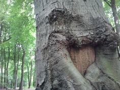 Wie van hout houdt....
