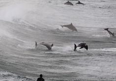 Dolphins around Sydney
