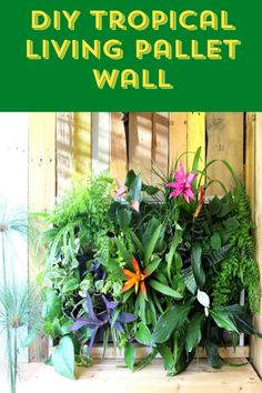 Beautiful step-by-step tutorial for building and maintaining a Tropical Living Pallet Wall