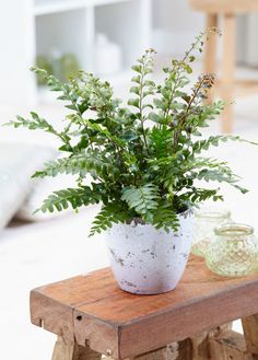 Assortiment overzicht - Air So Pure Getting Old, South America, House Plants, Leaves, Beautiful, Indoor, Indoor House Plants, Getting Older, Foliage Plants