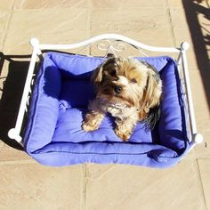 This beautiful dog bed is just stunning. Its for small size dogs. It comes without the matress inside. Your pet will just love this princess type bed. SO cute! #lovebalela
