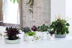 Peperomia is part of the 'blessed plants', that protect, purify and absorb negative energy from its surroundings.
