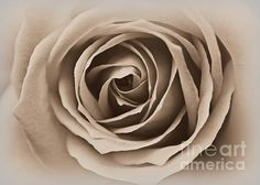 I am Beautiful by Clare Bevan Photography #ClareBevan #interiordesign #photographyforsale #monochromephotography #macrophotography