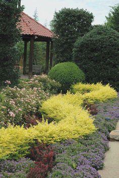 Buy Sunshine Ligustrum For Sale Online From Wilson Bros Gardens Garden Shrubs, Landscaping Plants, Front Yard Landscaping, Landscaping Ideas, Sunshine Ligustrum, Landscape Design, Garden Design, House Landscape, Front Yard Flowers