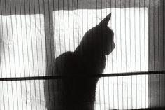 Vague a l'ame by gonecanuck on DeviantArt Deviantart, Cats, Artwork, Animals, Art Work, Animais, Gatos, Work Of Art, Animales