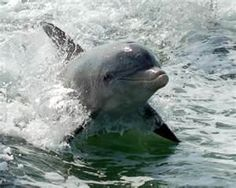 dolphin baby stuff - Bing Images