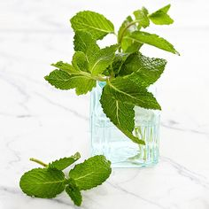 Health Benefits of Mint: http://www.bhg.com/health-family/nutrition/healthy-foods/health-benefits-of-mint/