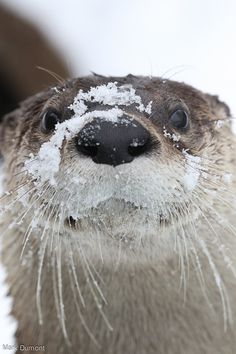 Otter has really enjoyed the snow