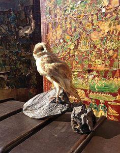 NEW ARRIVALS: A DECORATIVE EDWARDIAN MOUNTED BARN OWL