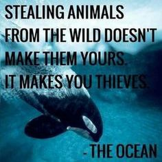 Stealing animals from wild doesn't make them yours, it makes you thieves.