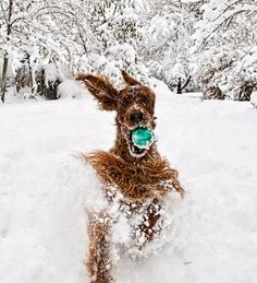 One happy dog with his blue ball romping through the snow....priceless!!!