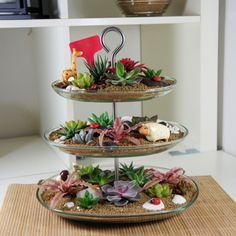 欧式多肉套餐精选 多肉植物 绿植盆栽 创意 一宅一花