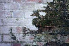 Moss Bricks Brick Texture (w)