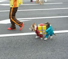Look! 2 dogs carrying a present! wait a minute...... the 2nd dog isnt a real dog... hahahaha CUTE!