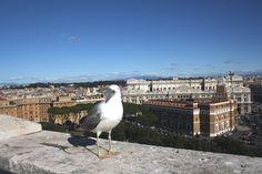 a seagull, Castel Sant'Angelo, Rome, Italy