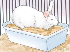 Haz que tu conejo haga pis y caca en su caja, fácil y sencillo.