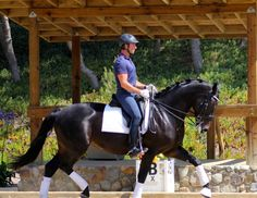 2007 Hannoverian Mare By Hotline schooling 3rd level Dressage Horse for Sale