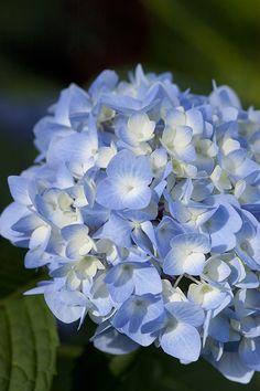 Beautiful+Blue+of+The+Orginal