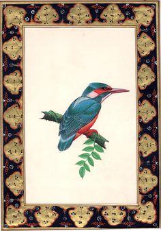 Kingfisher Image Pai