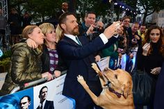 "*DIES* | Tom Hardy Took His Dog To The ""Legend"" Premiere And It Was Adorable"