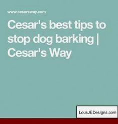 How To Train Your Dog Not To Bark When You Leave and Pics of Brandon Mcmillan Dog Training Tips. Tip 1960154 Guard Dog Training, Dog Training Bells, Dog Training Methods, Basic Dog Training, Potty Training Tips, Dog Separation Anxiety, Dog Anxiety, Anxiety Tips, Stop Dog Barking