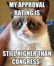 Congress - Grumpy Cat Quotes