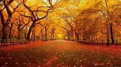 Autumn is there! Pics of beautiful trees - Fabulous Pictures