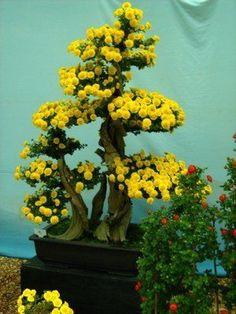 Resultado de imagem para bonsai trees for sale