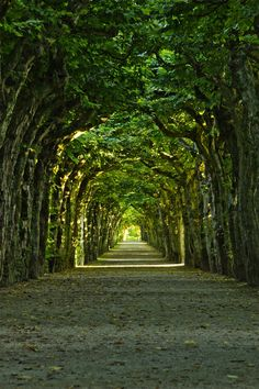 It's a beautiful world- Tree Tunnel Germany