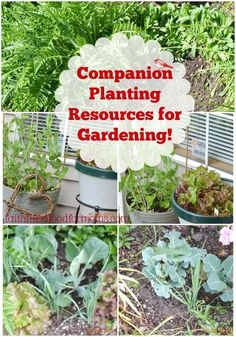Companion Planting Resources. Having a garden is a GREAT way to save on finances and spring is almost here! Some plants do better planted next to one another. See which ones.