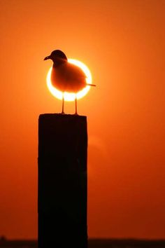 Gull. Photo by Jake Orr