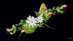 beautiful pictures of flowers and butterflies - Google Search