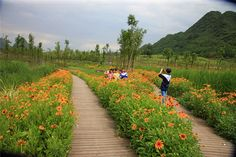 Minghu Wetland Park by Turenscape 14 « Landscape Architecture Works | Landezine