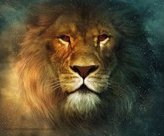 9 Best Majestic Lion Images Big Cats Animals Beautiful Beautiful