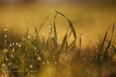 Softness of sunrise by DanielDanilov. @go4fotos
