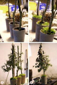 So entsteht ein schönes kleines Bäumchen aus Tanne oder Fichte! Die Zweige und die Zapfen sind von der Lärche.